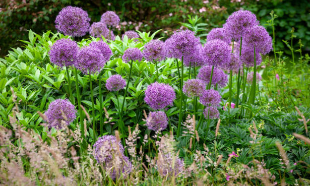 Gardening jobs to do in June