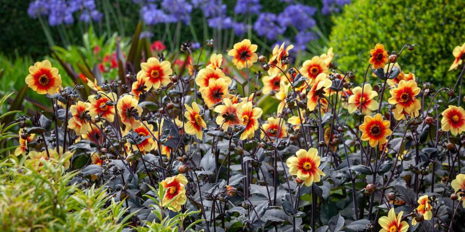Five plants for quick summer colour