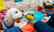 7 summer barbecue foods you should never feed to your dog