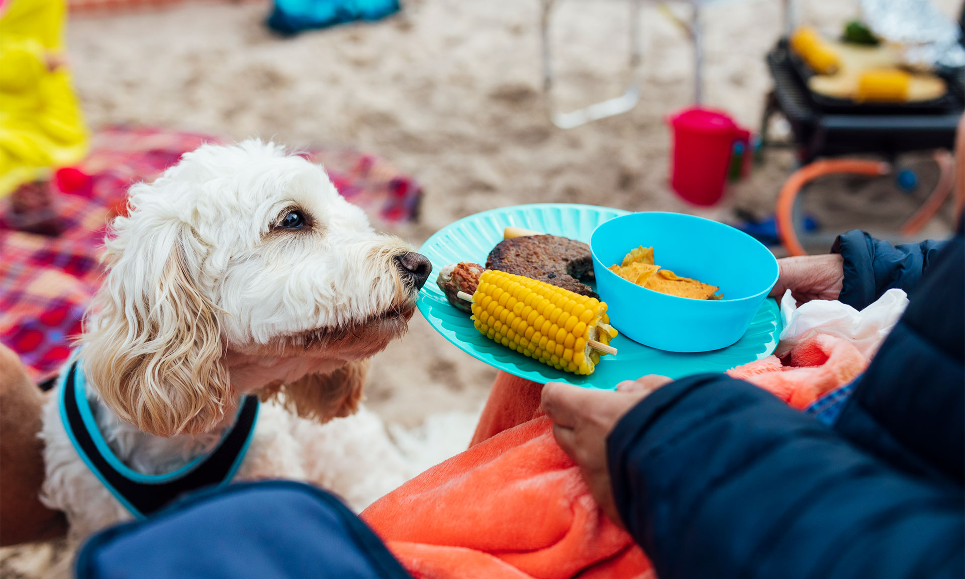 7 summer barbecue foods you should never feed to your dog – Which? News