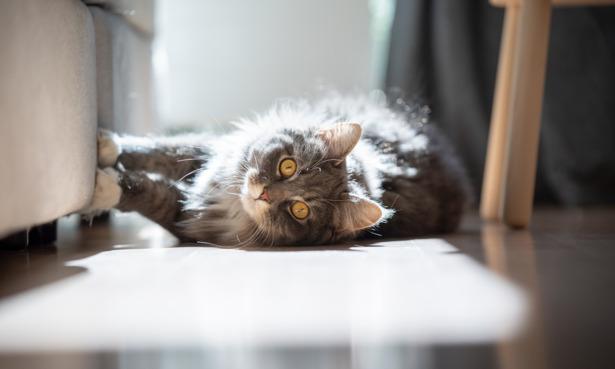 Cat lounging at hme