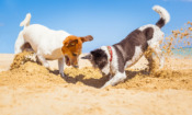 How to take great photos of your dog – our top 9 hacks for mastering action shots and puppy portraits