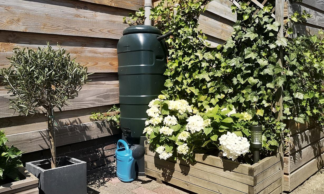 Rain barrel in a garden
