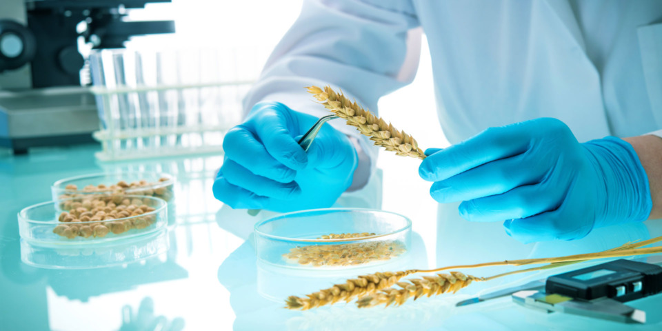 Gene-edited crops: what are they and should you be concerned?