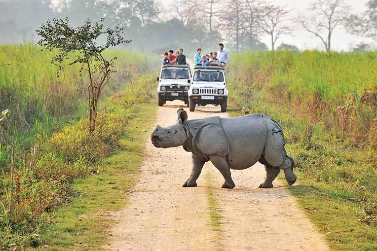 национального парка Казиранга в Индии