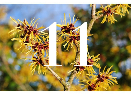 Witch Hazel is present in a lot of products, and helps keep skin rehydrated and rejuvenated