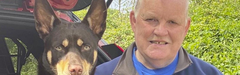 Person, German Shepherd, Dog, Canine, Pet, Mammal, Animal, Police Dog