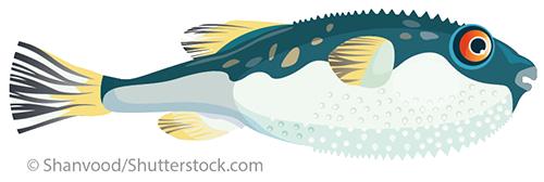 Fisch4.eps_fmt1.png