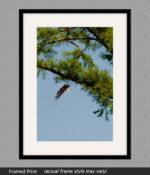 framed eagle print