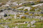 ireland stone walls