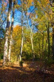hiking trails images