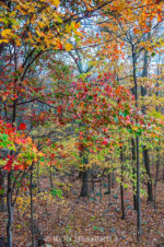 virginia fall colors peak