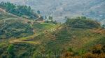sapa rice fields vietnam by rob hemphill
