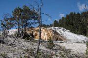 mammoth hot springs yellowstone
