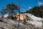 hot mammoth springs yellowstone