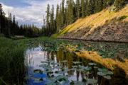isa lake yellowstone