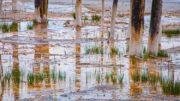 yellowstone geyser dead trees photos