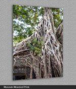 angkor wat tree roots print