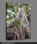 angkor wat tree roots canvas