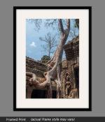 angkor wat trees framed print