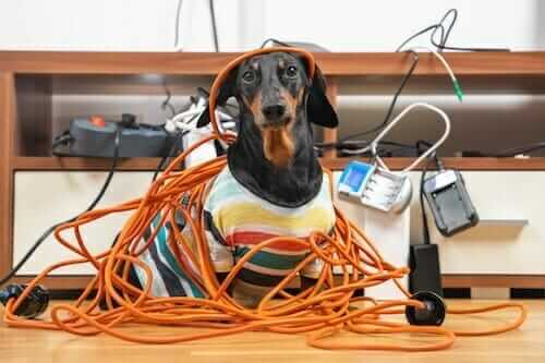 dog with electricals