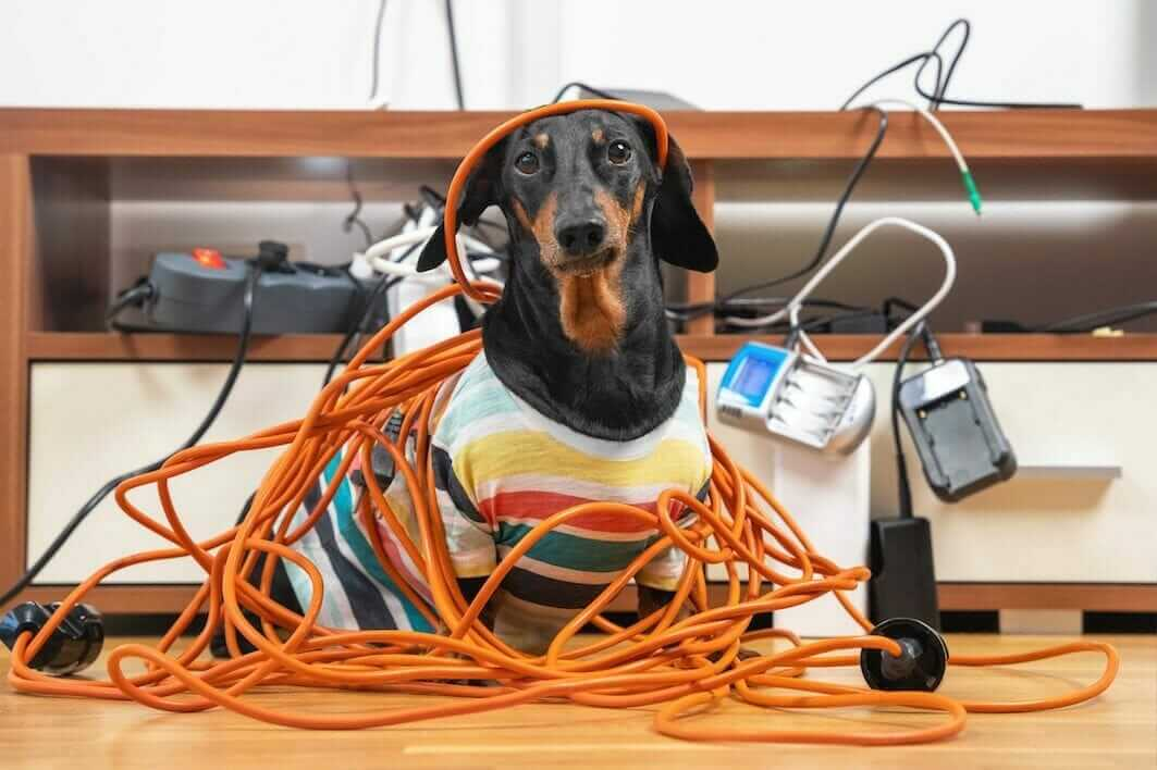 electrical clutter and dog