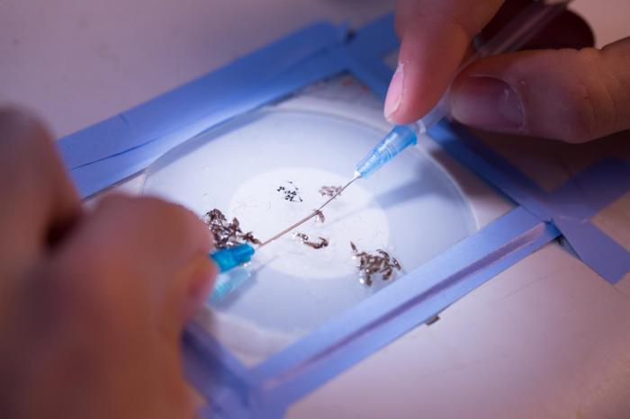 Une découverte sur l'infection du paludisme dans les cellules du foie
