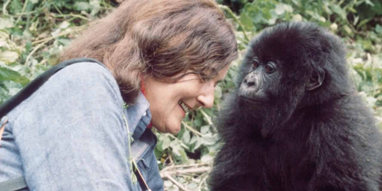 Diane Fossey, la primatologue qui a donné sa vie pour les gorilles