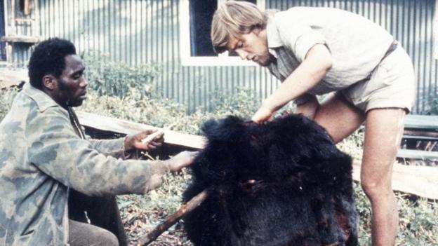 Ian Redmond ramène le corps de Digit au camp, le gorille préféré de Diane Fossey