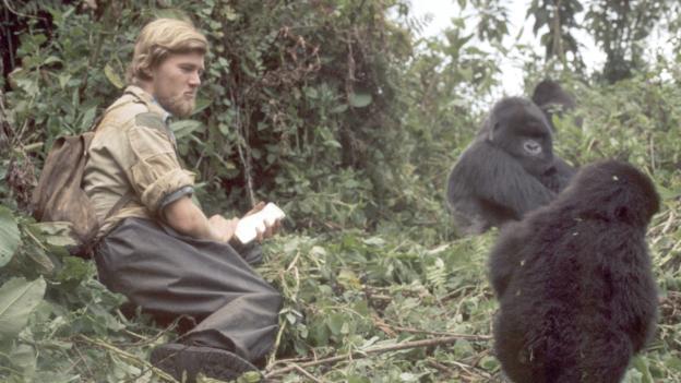 Ian Redmond avec les gorilles, photo prise par Diane Fossey