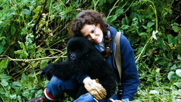 """Sigourney Weaver dans le rôle de Diane Fossey dans le film """"Gorilles dans la brume"""""""