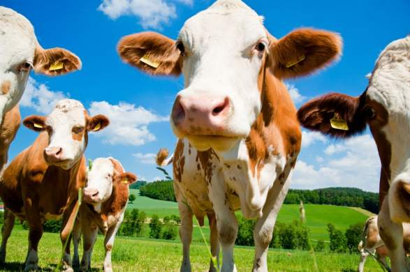 La Chine va construire la plus grande usine de clonage d'animaux au monde