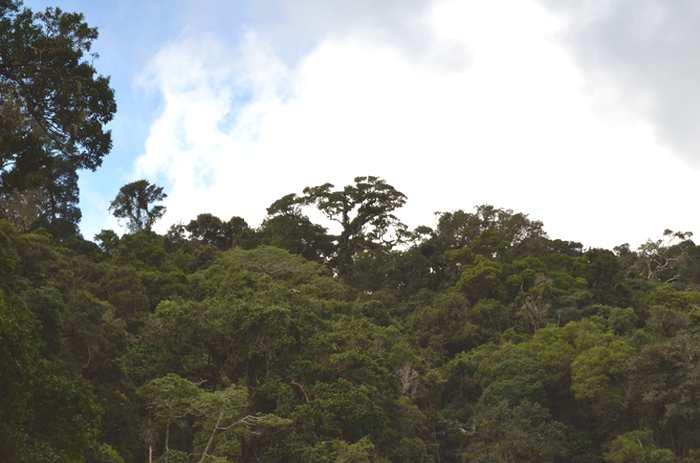 Menace sur les forêts tropicales qui fonctionnent comme des puits de carbone. La protection de ces forêts à Madagascar est une priorité
