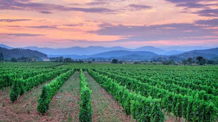Le changement climatique a été positif pour le vin, mais cela risque de changer dans le futur