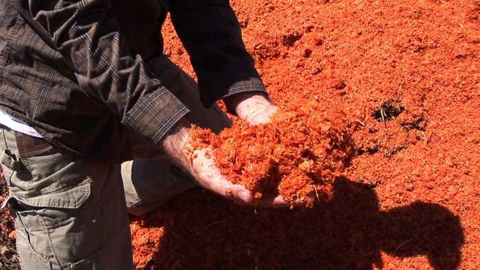 Des chercheurs proposent de générer de l'électricité à partir de déchets de tomates