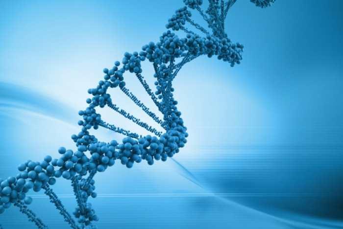 Les gènes sont liés à des facteurs agissant sur le comportement sexuel chez les adolescents. La perte de virginité peut être lié à ces comportements.