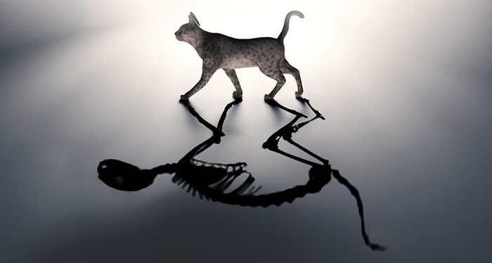 Une expérience du chat de Schrödinger dans 2 boites en même temps. Un pas de plus vers l'informatique quantique.