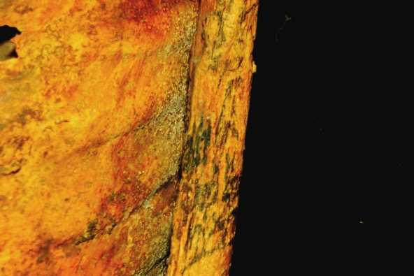 Une identification difficile à cause de la peau déformée de cette momie. Ici, ce sont 2 vaches de Hathor.