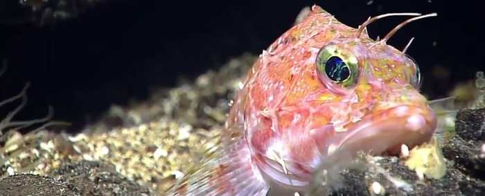 Plongez en Live dans la Fosse des Mariannes avec la mission Okeanos Explorer