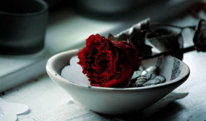 Monsanto a publié un brevet qui empêche les roses, les pétunias et les oeillets de se faner.