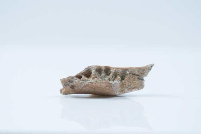 On a découvert des fossiles appartenant aux ancêtres de l'Homme de Florès alias le Hobbit, mais on ignore encore l'origine de ces premiers humains sur l'île de Florès.