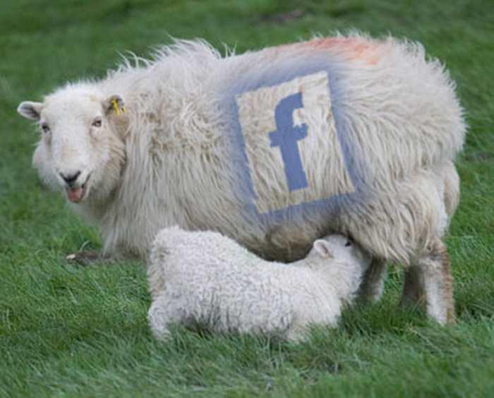 60 % des utilisateurs sur les réseaux sociaux ne cliquent jamais sur les liens