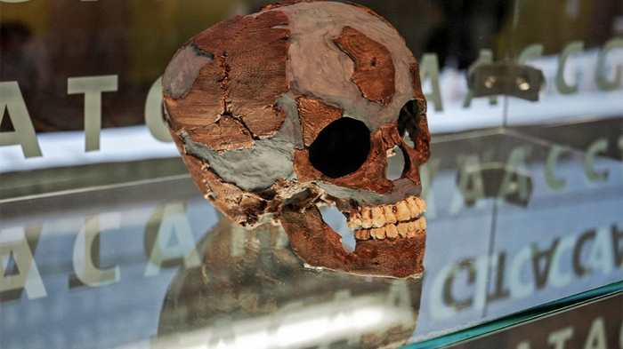 Une nouvelle étude suggère que les cerveaux des bébés de Néandertal se sont développés de la même manière que les humains.