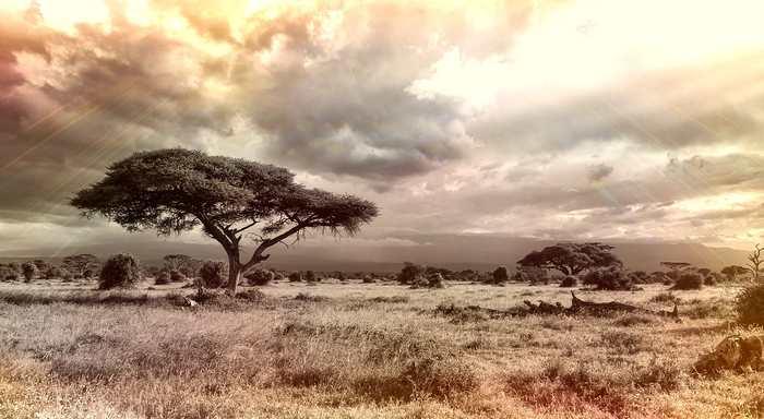 Désormais, la nature sauvage, des régions totalement intactes, ne couvre que 25 % de la planète. Et ces régions sauvages pourraient disparaitre en un siècle si on ne prend pas des mesures urgentes.