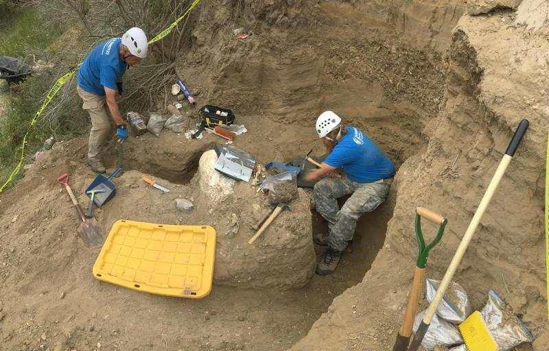 Des chercheurs ont découvert un crâne de mammouth parfaitement préservé sur les îles Channel dans l'Etat de California. Et sa découverte soulève des questions.