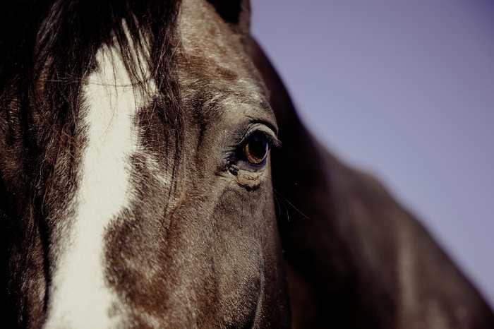 On sait que les chevaux peuvent reconnaitre des expressions faciales, mais désormais, une étude suggère qu'ils sont aussi capables de reconnaitre des symboles.