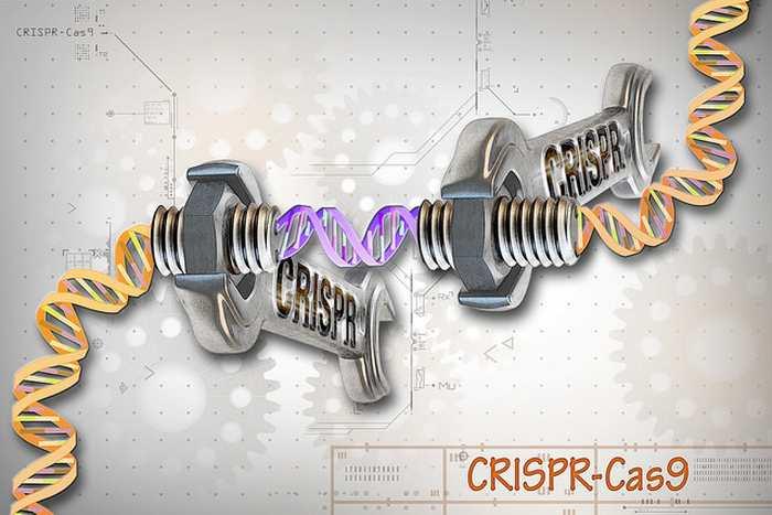 Le CRISPR/Cas9, l'une des techniques de modification génétiques les plus performantes, pourraient révolutionner de nombreux aspects de notre société.