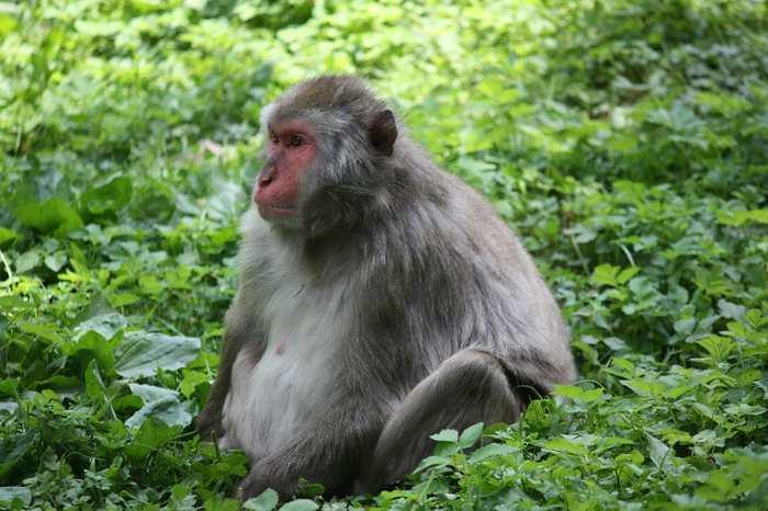 La théorie de l'esprit décrit l'une des prédispositions les plus puissantes de l'esprit humain. Nous pouvons déterminer l'état mental d'une autre personne pour deviner ce qu'il va faire par la suite. Considérés comme étant uniques chez l'être humain, des chercheurs suggèrent que cette capacité de lire les esprits existe également chez les grands singes comme les chimpanzés, les orangs-outangs ou les bonobos.