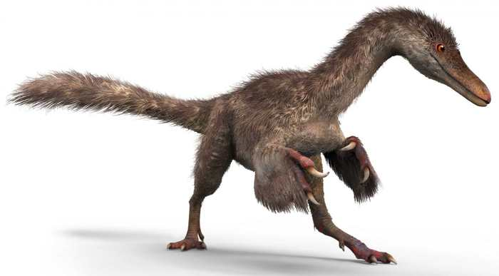 Une queue avec des plumes d'un dinosaure a été parfaitement conservée dans de l'ambre. Le dinosaure est un cousin plus jeune du T.Rex.