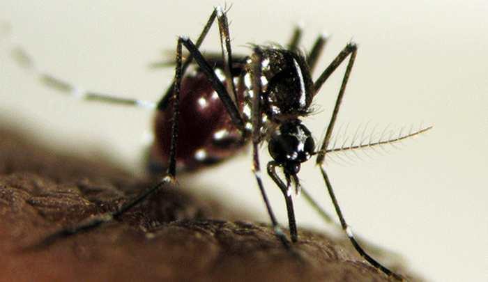 Une nouvelle recherche permet de mesurer l'exposition des personnes aux moustiques Aedes qui sont des vecteurs pour des maladies telles que Zika, la dengue ou le chikungunya.